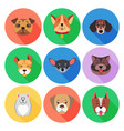 set pedigreed dogs on colored circle icons vector image vector image