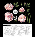 set tea roses their buds and leaves vector image