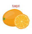 kumquat setexotic fruitcartoon flat style vector image vector image