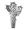 monochrome blurred silhouette of cactus with two vector image vector image