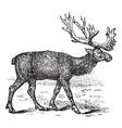 Reindeer vintage engraving vector image vector image