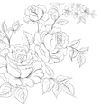 Bouquet of roses iolated on white background vector image