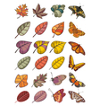 collection of leaves and butterflies vector image