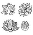 set lotus flower in engraving style design vector image