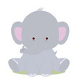 baby cute elephant vector image
