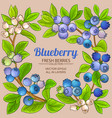 blueberry branches frame vector image vector image