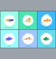 gold fish and blue tamarin set vector image vector image