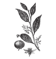 gum tree vintage vector image vector image