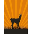 Lama silhouette vector image vector image