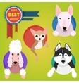 set different dog breeds vector image