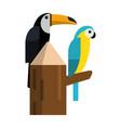 tucan exotic birds vector image