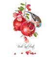 finch pomegranate card vector image