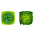 full square green leaves frame vector image vector image