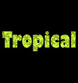 tropical text with palm leaves inscription vector image vector image