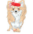 Chihuahua in the red hat and bracelet vector image