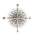 compass wind rose vintage sketch vector image