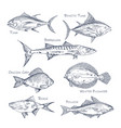 set isolated fish sketch for shop or storemenu vector image vector image