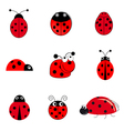 set of ladybugs vector image vector image