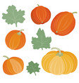 set pumpkins different shapes with leaves vector image vector image