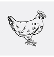 Hand-drawn pencil graphics hen Engraving vector image