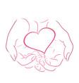 contour pink heart in women contour hands vector image vector image