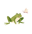 cute funny frog hunting butterfly hungry toad vector image vector image