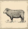 sheep on grunge background design element vector image