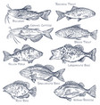 sketch icons seafood or water fish fishing vector image