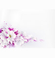 white beautiful magnolias spring vector image vector image