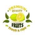 Fresh lemon fruits round badge with leaves vector image vector image