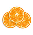 fresh oranges isolated on white background vector image vector image