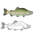 Hunchback salmon fish vector image vector image