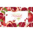 pomegranate horizontal banner vector image