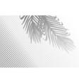 realistic tropical shadow vector image vector image