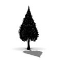 silhouette of fir vector image vector image