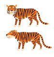 tiger stand isolated on white vector image vector image