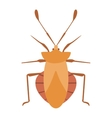 Beetle bug insect isolated on white vector image