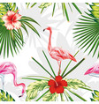 composition exotic birds flamingos plants flowers vector image vector image