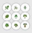 flat icon bio set of wood rosemary tree and vector image vector image
