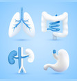 human organs on a white background blue objects vector image