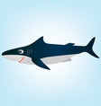 smiling white shark cartoon vector image