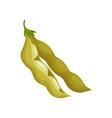 soya bean healthy vegetarian food vector image