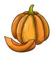 colorful sketch of pumpkin vector image