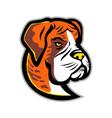 boxer dog mascot vector image