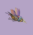 fantasy man is riding a bug vector image