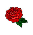 gorgeous red rose with two green leaves old vector image