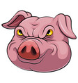 head an pig cartoon vector image vector image