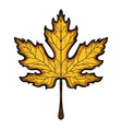 autumn maple leaf hand drawn colored sketch vector image