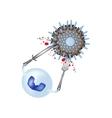 Phagocytosis Leukocyte absorbs the virus vector image vector image
