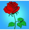 Rose red flower vector image